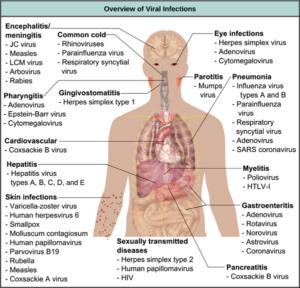 human-virus-graphic-from-khanacademydotcom